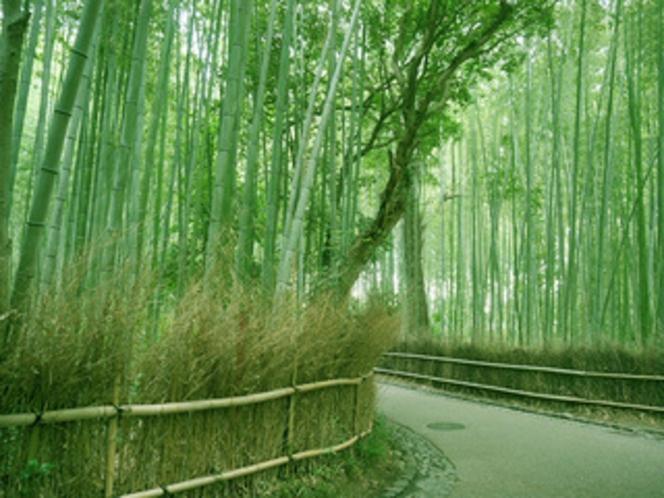 趣ある嵯峨野の竹林