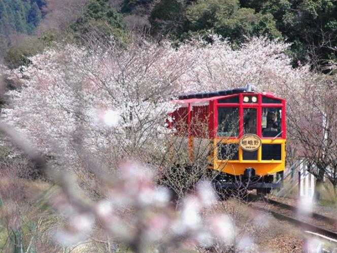 トロッコ 桜