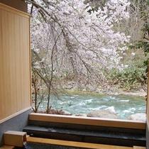 【貸切露天風呂 木漏れ日の湯】春は満開の桜を愛でながら花見風呂。この美しい風景を二人で独占できる贅沢