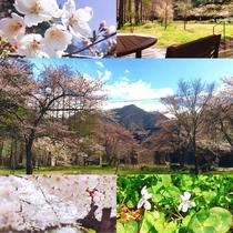 春のすみれ~感動の景色たち