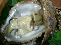 岩牡蠣お造り