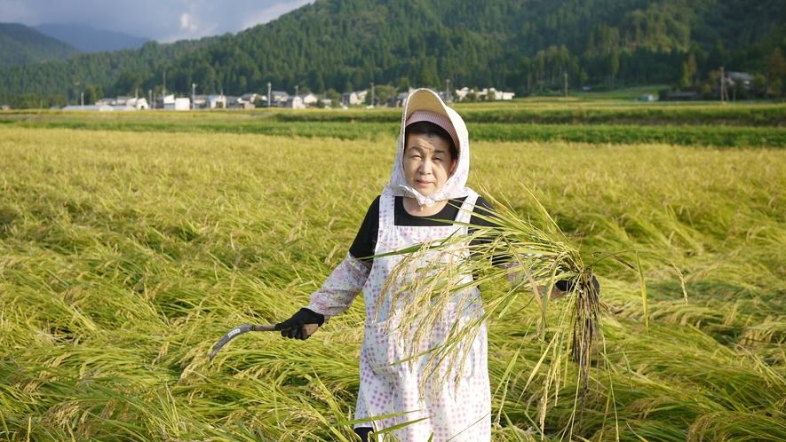 *安心安全の自家製のお米、お野菜を使っております