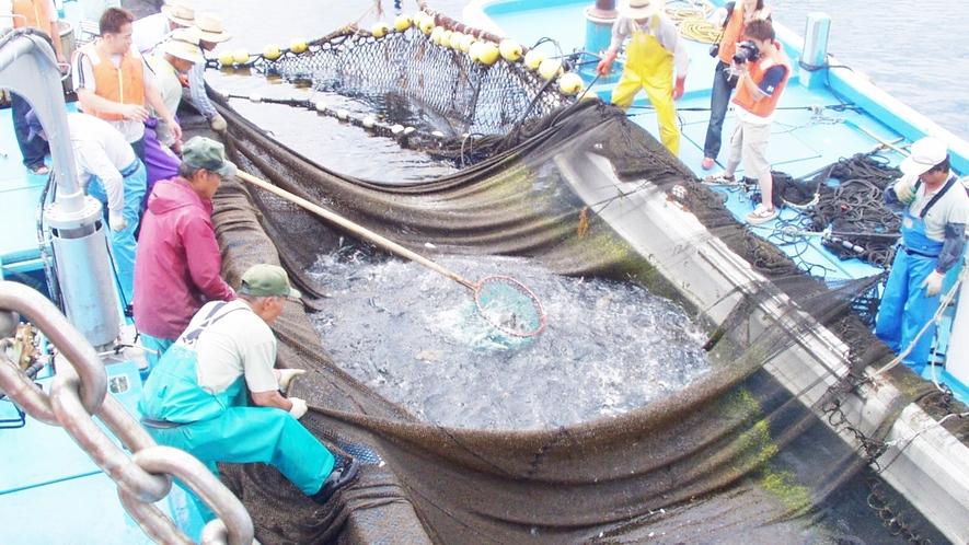 *周辺観光・漁業体験/茱崎漁港では、定置網漁の体験ができます!