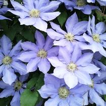 *【周辺】四季折々、当館周辺には季節の花が咲き誇ります。