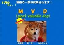 5月MVD