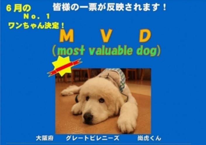 6月MVD