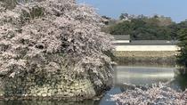 【春の景観】お堀と桜