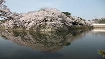 【春の景観】御堀と桜