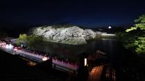 【春の景観】夜桜ライトアップ
