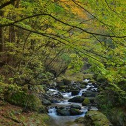 ■塩原の自然風景、秋渓流