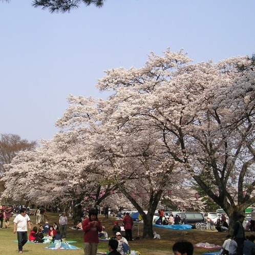 黒磯さくら祭(黒磯公園)