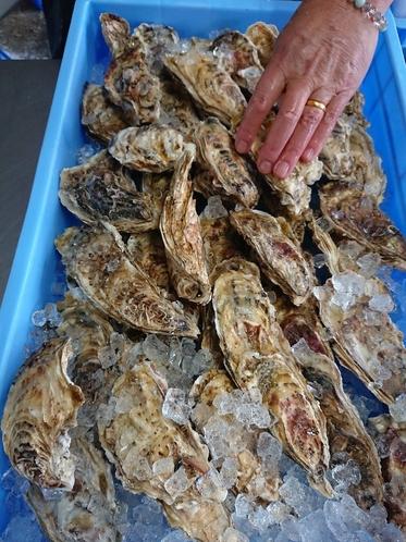 寿都産「寿」牡蠣