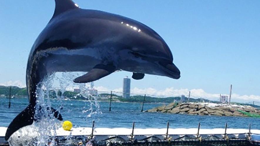 *【その他】今年もサンセットビーチ(日間賀島 西港)にイルカがやって来る!