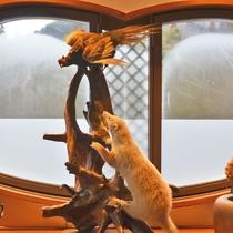 *【剥製】館内には動物の剥製が。自然の中に生きる動物たちを身近に感じていただけます