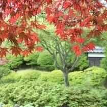 庭園 紅葉
