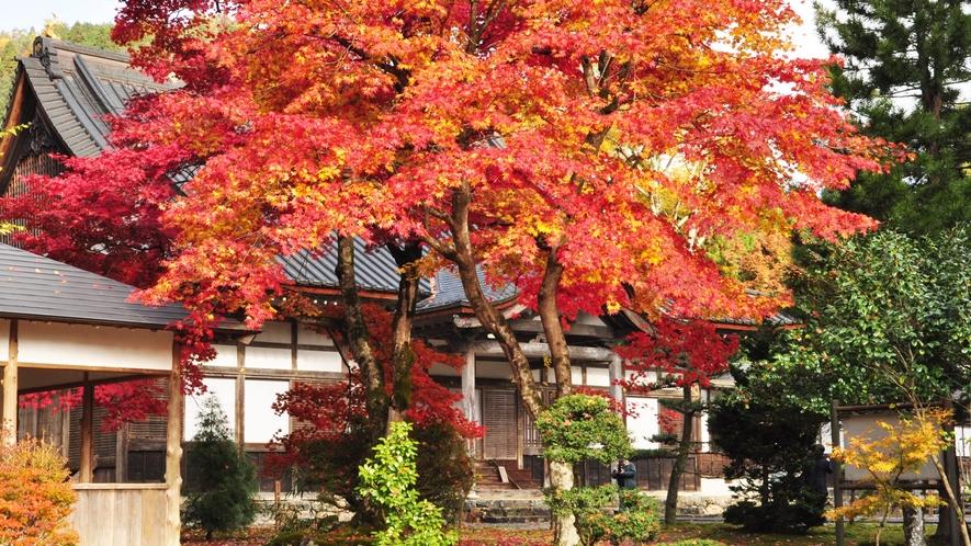 *赤く色づく木々を眺めて紅葉狩りをお楽しみください♪