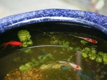 水がめで、金魚も泳いでいます。