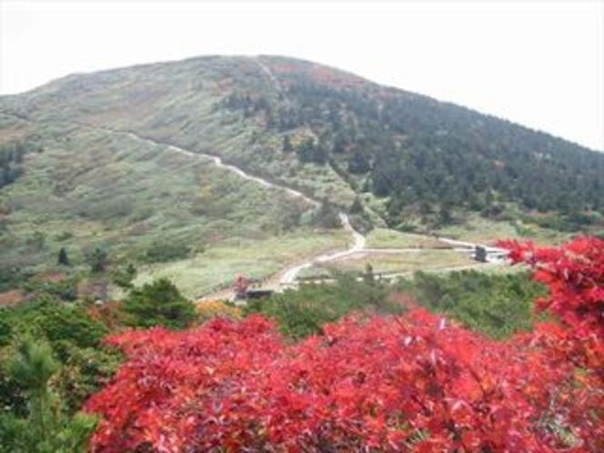 秋・山頂駅周辺紅葉 その2