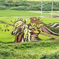 【小野川温泉街/観光】2015年の夏、青々と見頃を迎えた小野川の田んぼアート「前田慶次」
