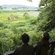 【小野川温泉街/観光】新名所「田んぼアート」歩いて10分ほどでご覧いただけます