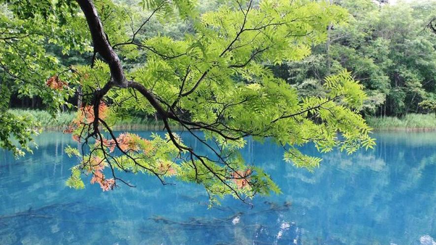 【オンネトー湖】