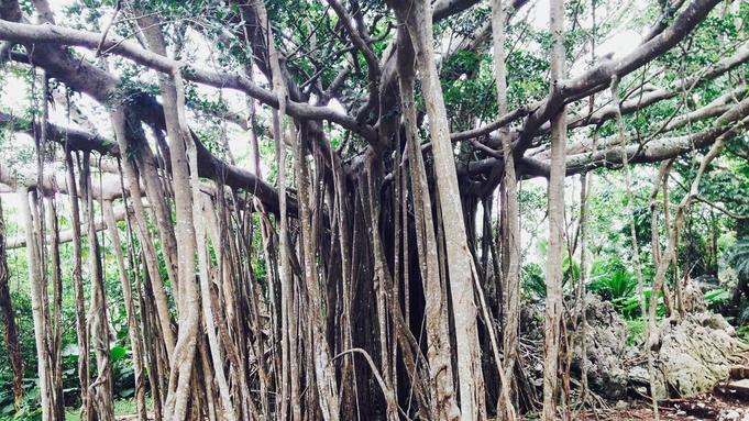 【冬の連泊割】<2泊から4泊 朝食付き> 沖縄北部「やんばる」で自然体験! *夕食選択可
