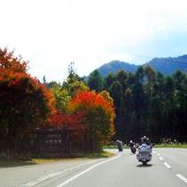 高原ルートの紅葉