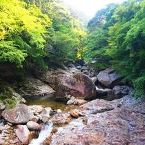 大自然の中にある滑床渓谷