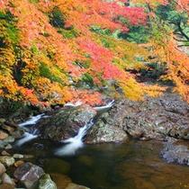 <滑床渓谷>11月のシーズンには紅葉がお楽しみいただけます。