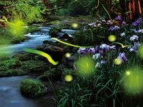 夜の庭園でホタル鑑賞会6月18日~7月18日開催※ホタルさんの都合によりご覧頂けない場合もございます