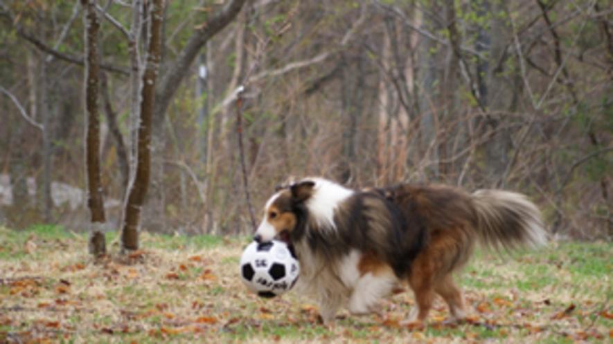 看板犬です。こーのすけです。