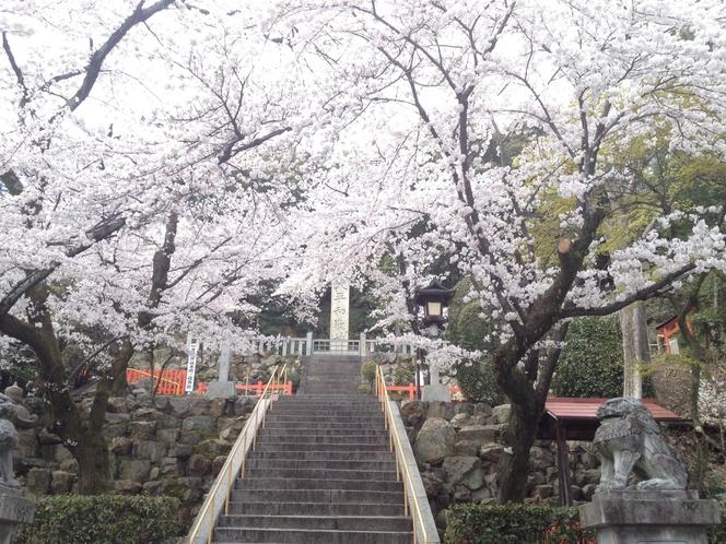 建勲神社。徒歩約5分。織田信長公が祀られており、美しい桜が楽しめます。隣には船岡山。