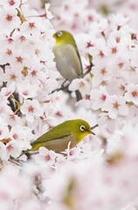 野鳥ガイドでは可愛い鳥たちに出会えます