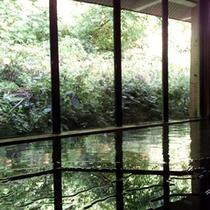 *小天狗の湯[男女別]/窓の外にはブナの原生林が広がる、清々しい内湯。