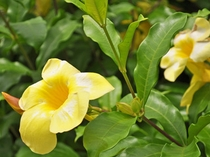 【中庭】沖縄を代表する花を楽しむこともできます