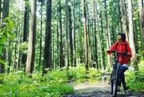 マウンテンバイクを楽しむ広い森がいっぱい。