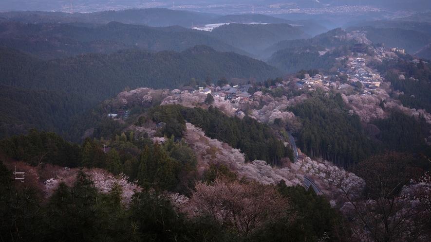 吉野 千本桜 ※イメージ