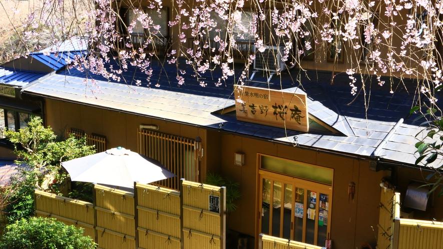 枝垂桜が暖簾のようにお出迎え