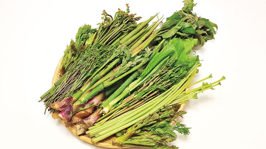 *【食材一例】山菜のシーズンには地元で採れた山菜もお出しします。