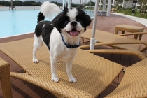 犬プールサイド