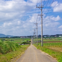 **【周辺観光】小浜島/シュガーロード