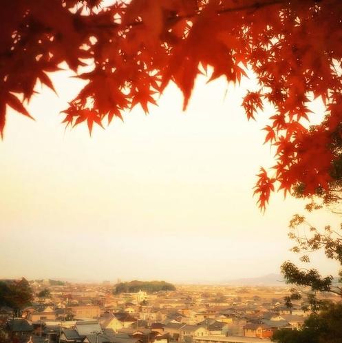 秋は紅葉も楽しめます。ゲストハウスから歩いて5分の早島公園からの眺め♪