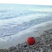 海とトマト