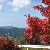高野山の紅葉 車で2時間