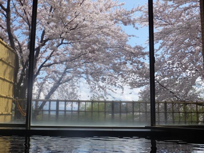 大浴場から桜!