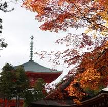 高野山・伽藍の紅葉の様子