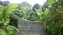 バナナシャワー