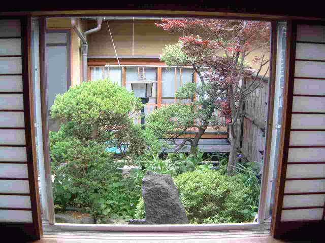 中庭の眺め〜白樺の間から