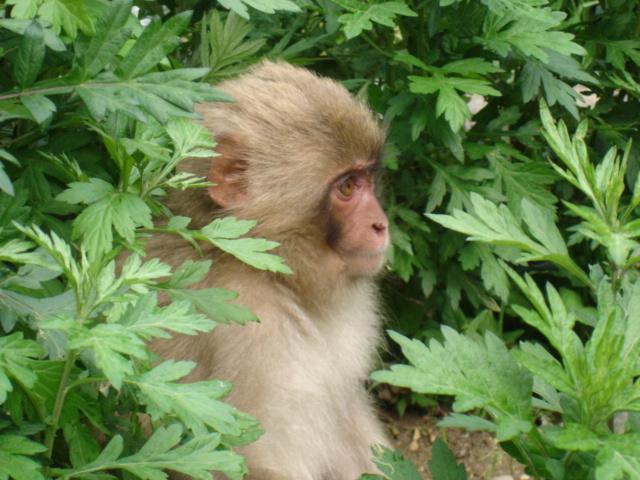 子猿〜視線の先に