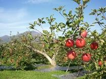 高社山とリンゴ